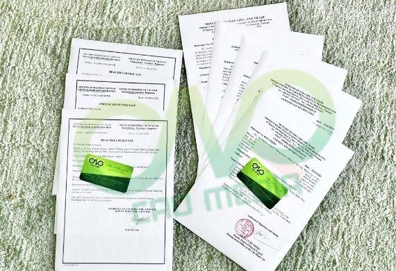 Điều kiện xin giấy phép xuất khẩu vỏ quế, bột quế là gì?